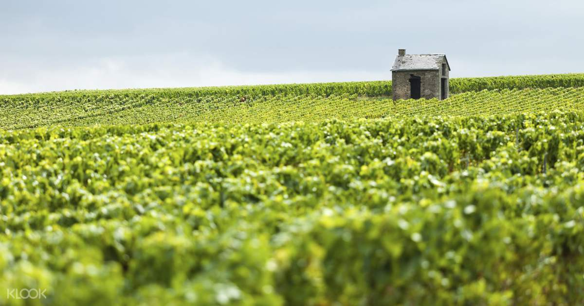 Guided Tour Of Reims Champagne Region From Paris Klook