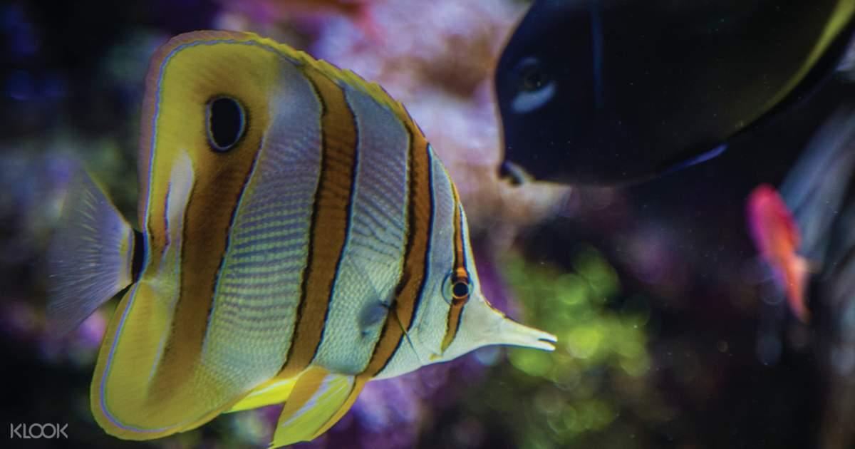 Sydney Sea Life Aquarium Discount Entry - Klook