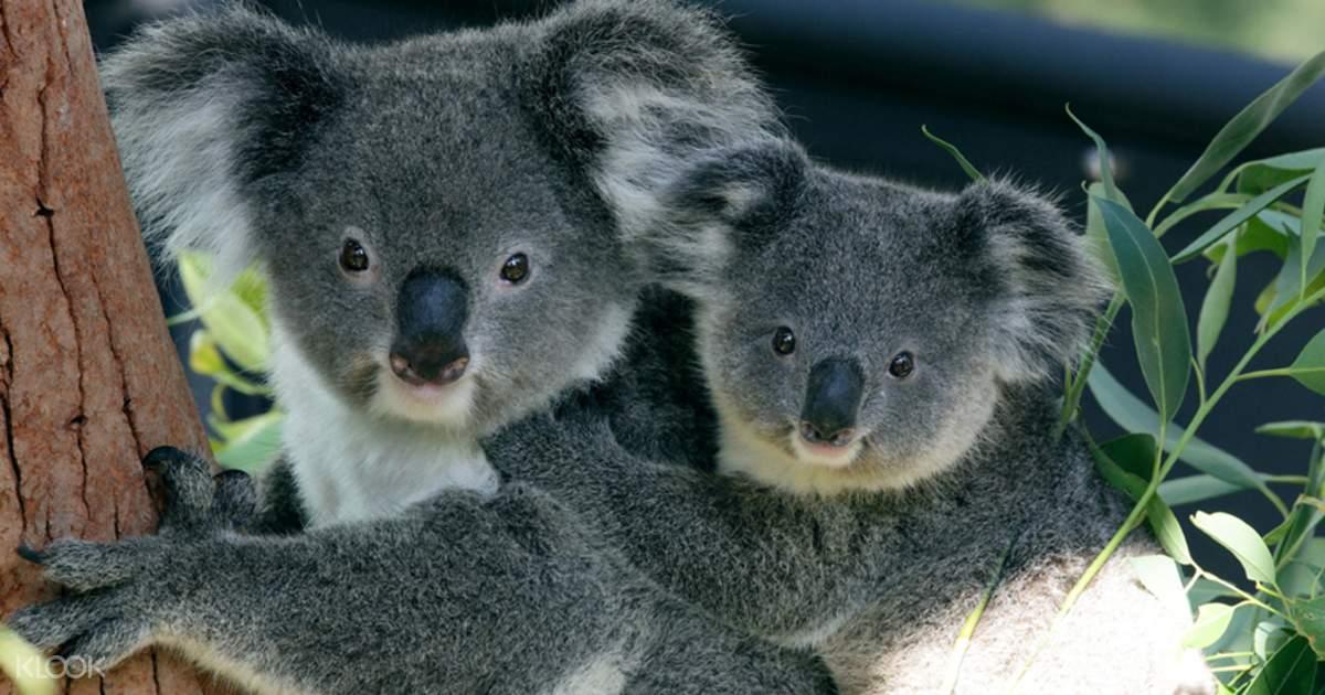 Taronga Zoo Sydney Ticket