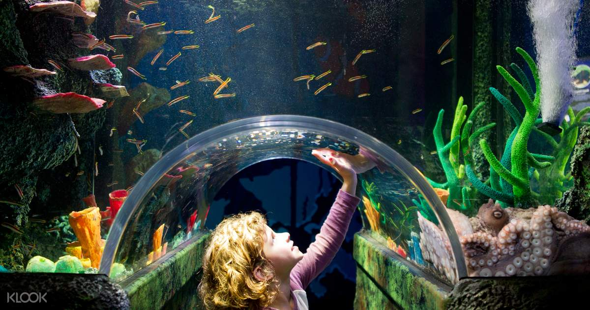 Melbourne Sea Life Aquarium & Legoland Discovery Centre ...