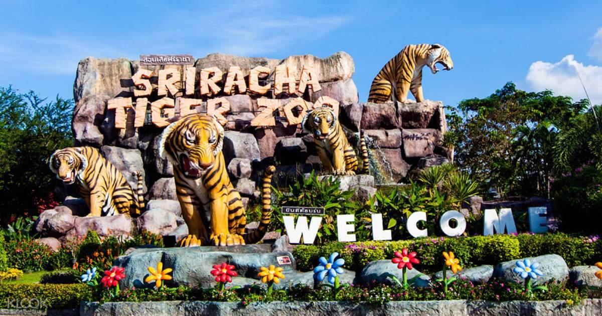 Kết quả hình ảnh cho Trại hổ Sriracha - Tiger Zoo