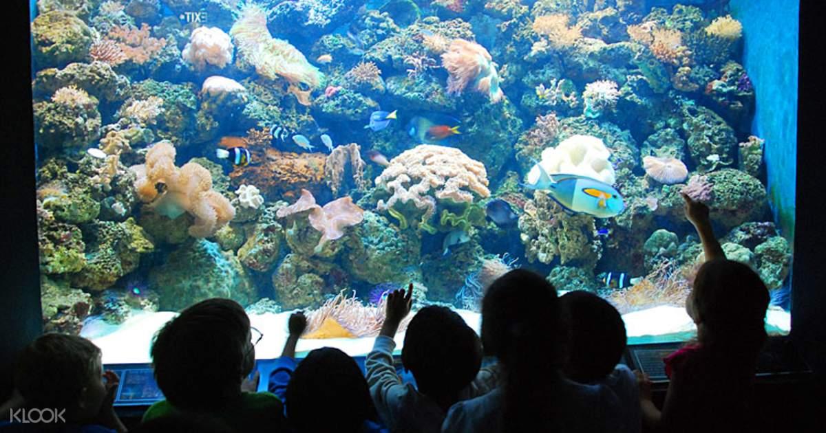 Ocean Adventure Admission Ticket in Subic Bay, Manila, Philippines - Klook