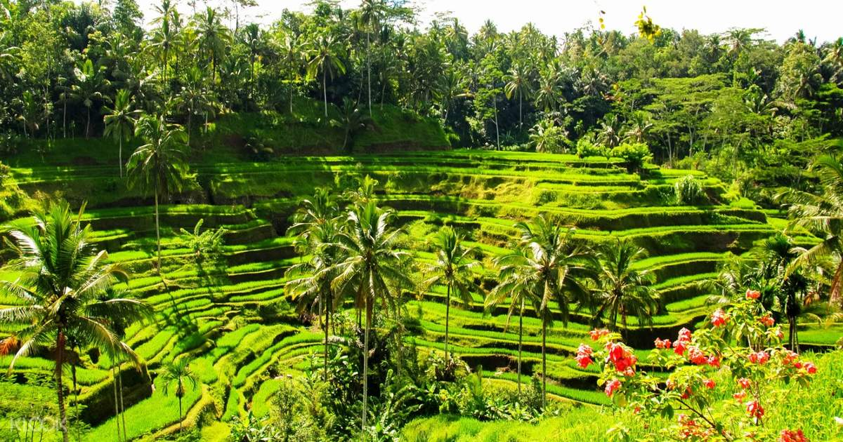 Up To 10 Off  Bali Swing, Ayung River Rafting, And Ubud Tour With Massage Experience -5029