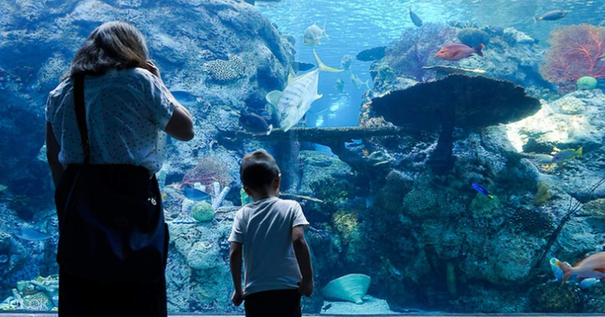 Get discount Aquarium of the Pacific at Night tickets for Aquarium of the Pacific Los Angeles. Goldstar has Aquarium of the Pacific at Night reviews, seat locations, and deals on tickets. /5(6).