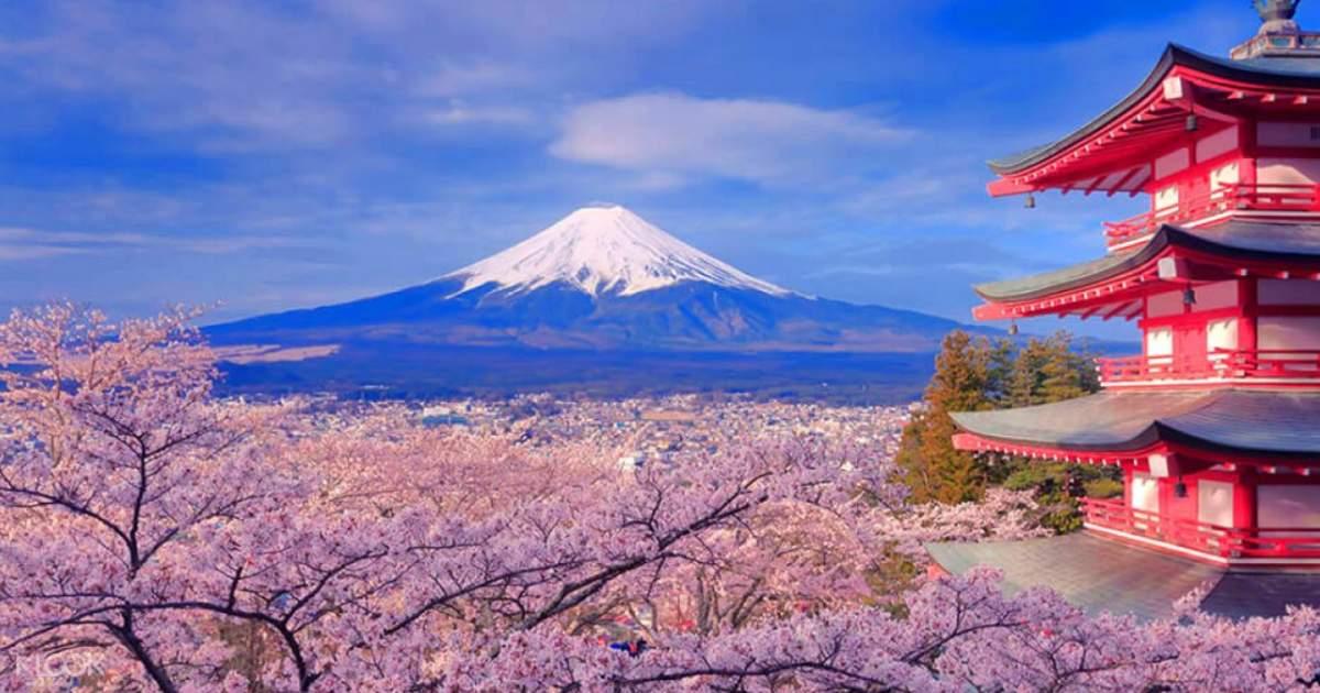 ทัวร์จุดชมดอกซากุระในบริเวณภูเขาไฟฟูจิ และทัวร์หมู่บ้านนินจาชิโนบิโนะซาโตะ