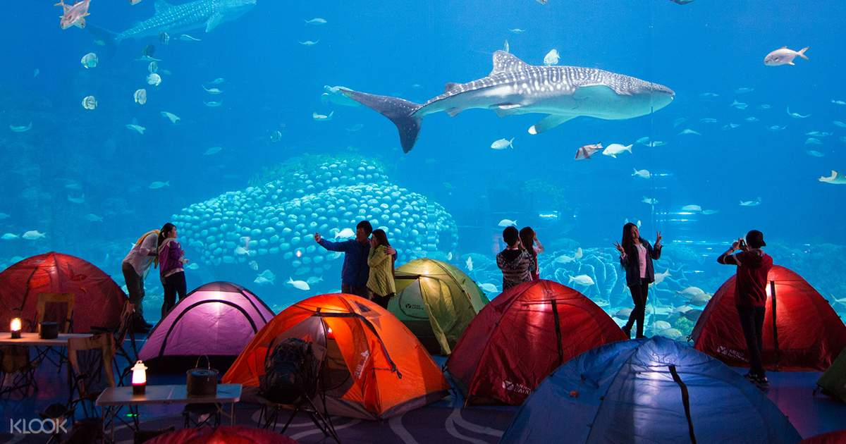 Chimelong Ocean Kingdom - Klook