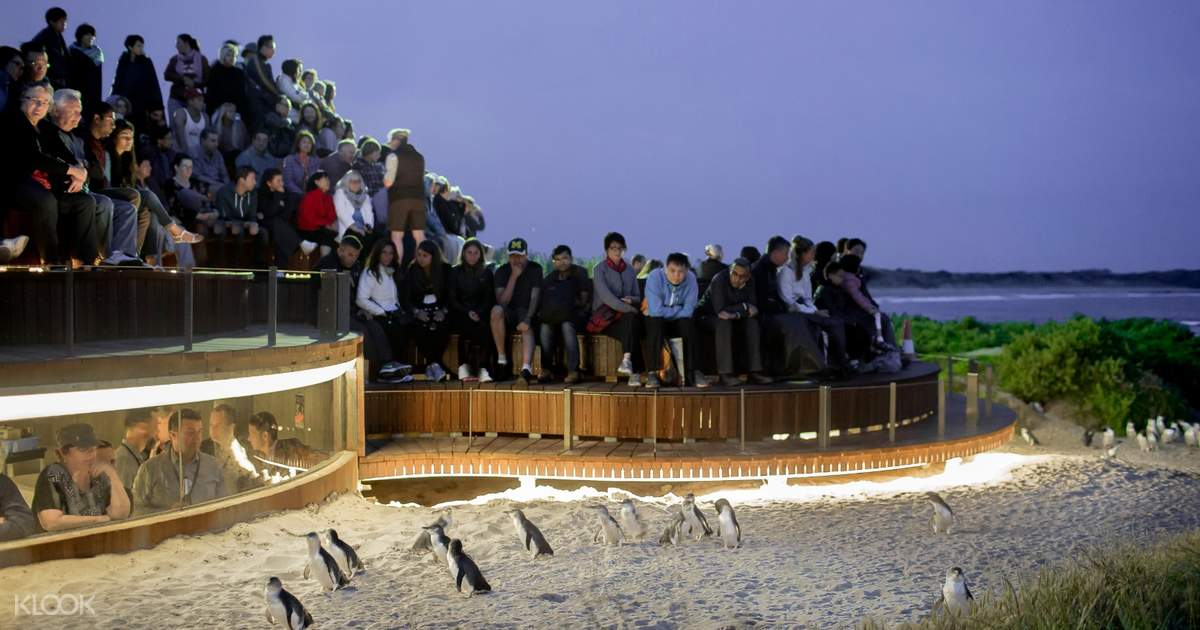 Penguin Parade Phillip Island Tour from Melbourne - Klook New Zealand