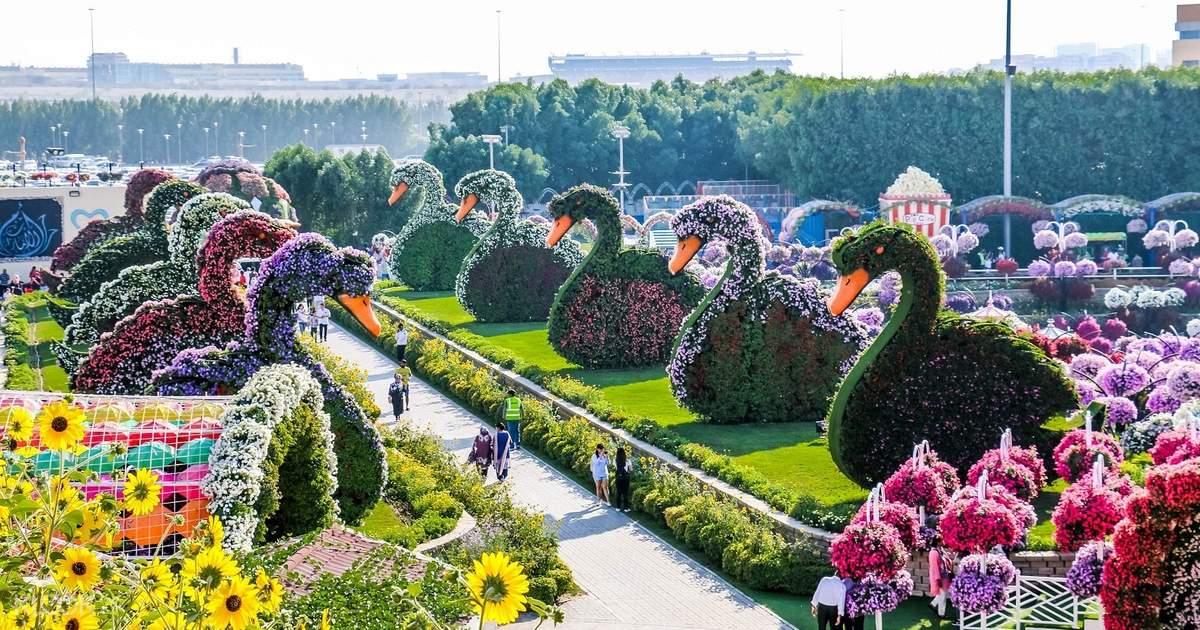 Дубай miracle garden дома на мальдивах купить