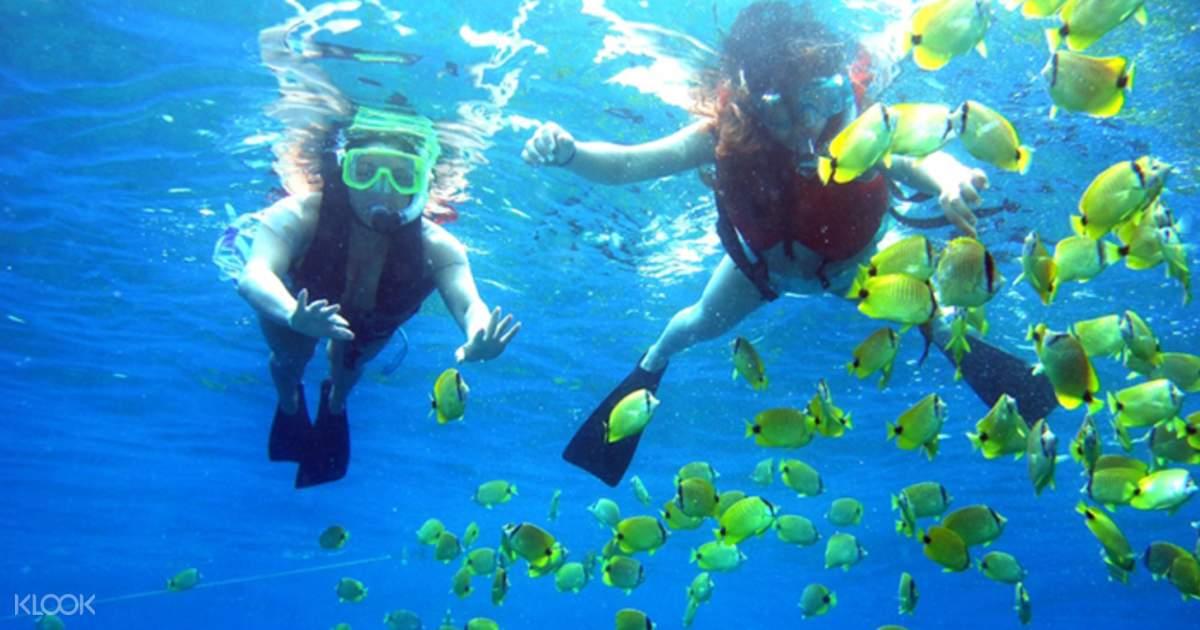 Pulau Payar Snorkeling and Diving Adventures from Langkawi