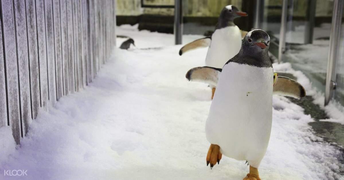 Sydney SEA LIFE Aquarium Penguin Passport Tour - Klook