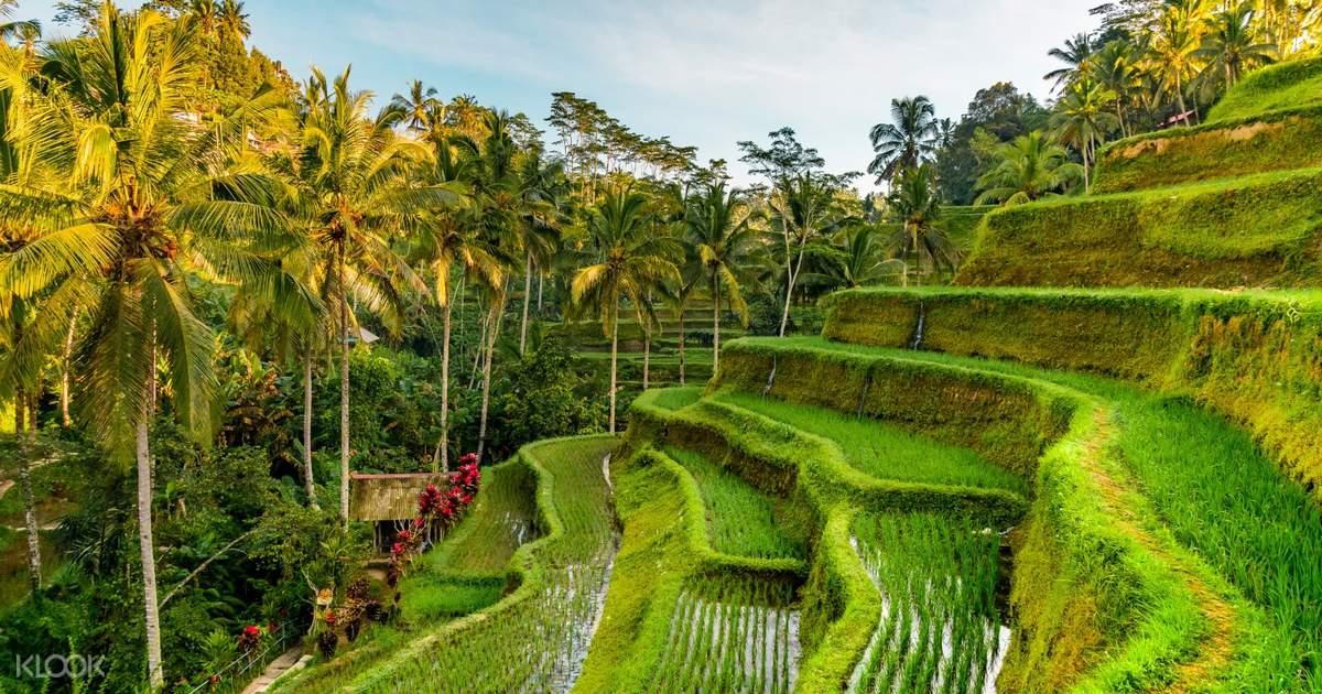 Private Ubud Trip in Bali, Indonesia