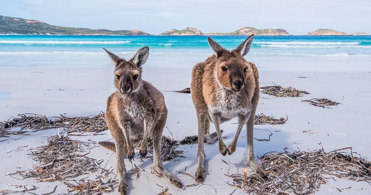 Overnight To Kangaroo Island