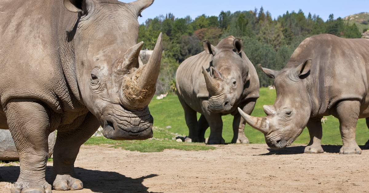 San Diego Zoo Safari Park Admission Ticket - Klook