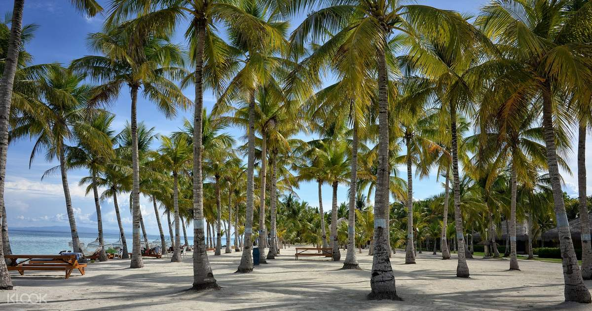 Panglao Island Land Tour with Bohol Bee Farm Lunch - Klook