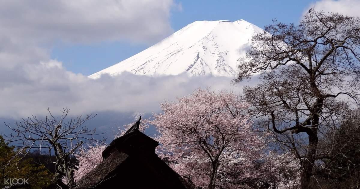 Fuji, Lake Kawaguchi, Oshino Hakkai, and Gotemba Premium