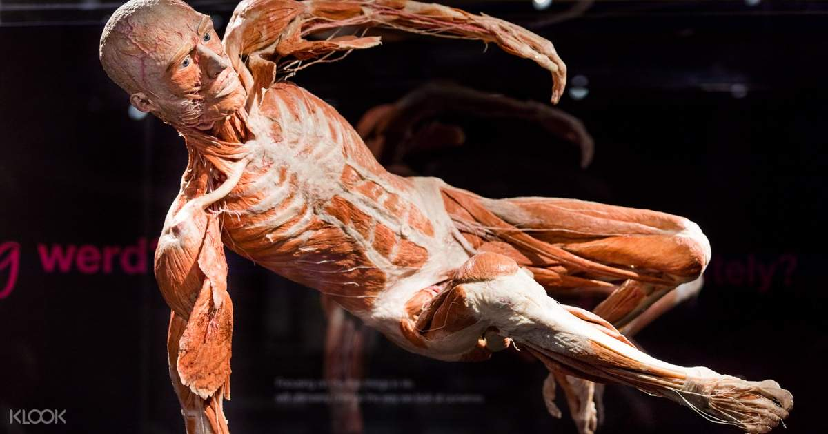 Body Worlds and Hop-On Hop-Off Bus Pass in Amsterdam, Netherlands