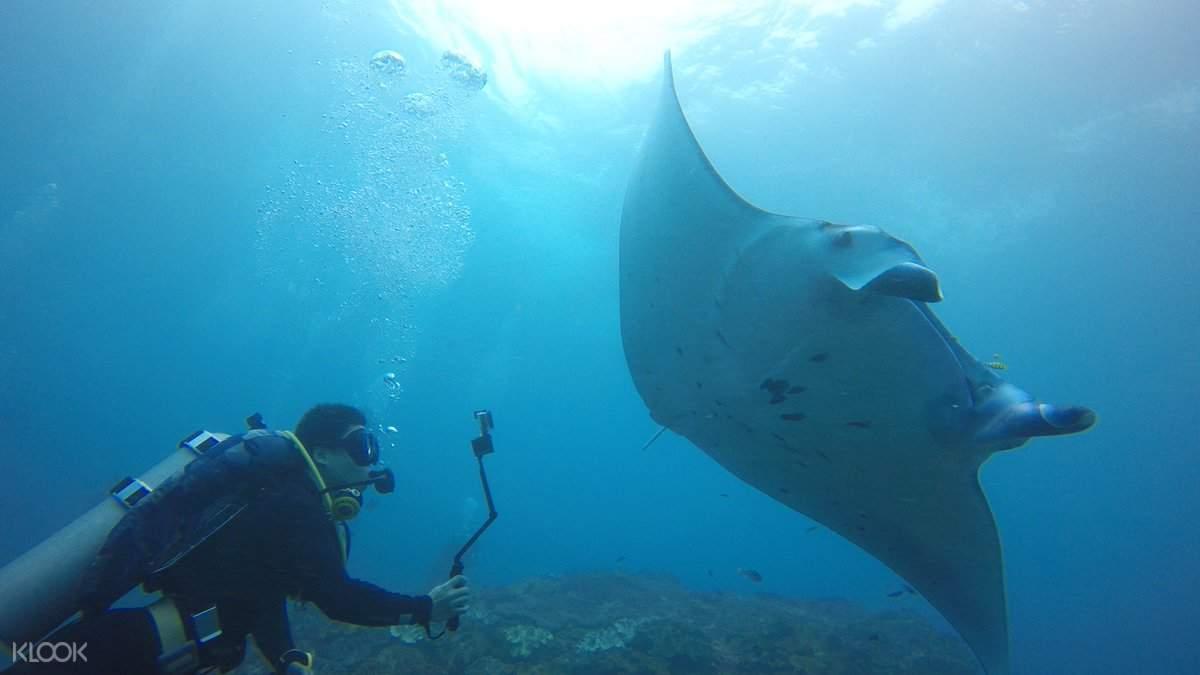 珀尼達島鬼蝠魟,珀尼達島水肺潛水,珀尼達島水肺潛水體驗,珀尼達島潛水
