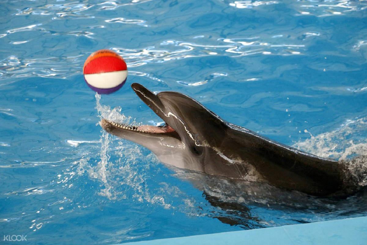 普吉岛海豚秀