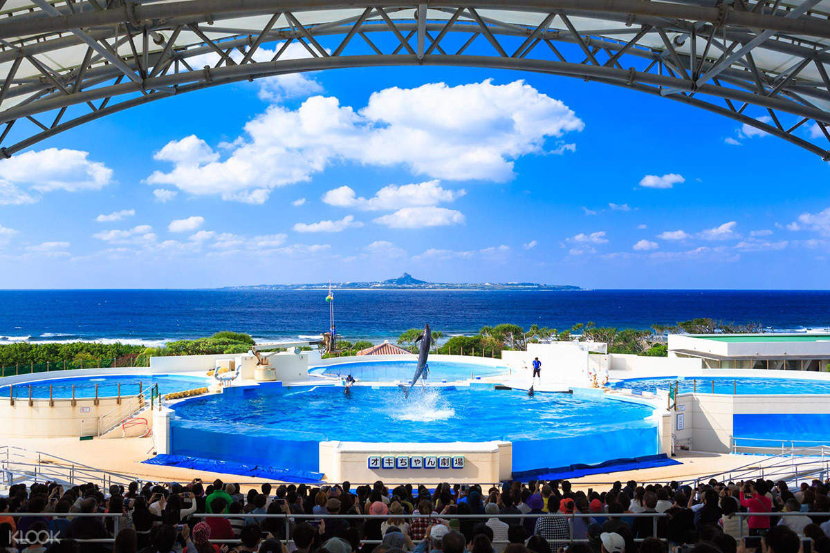 okinawa churaumi aquarium 4-6 day car rental okinawa