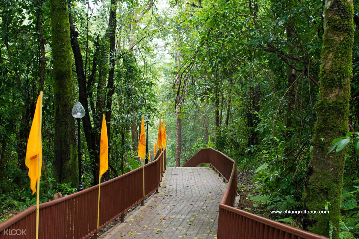 train through forest in doi tung royal villa