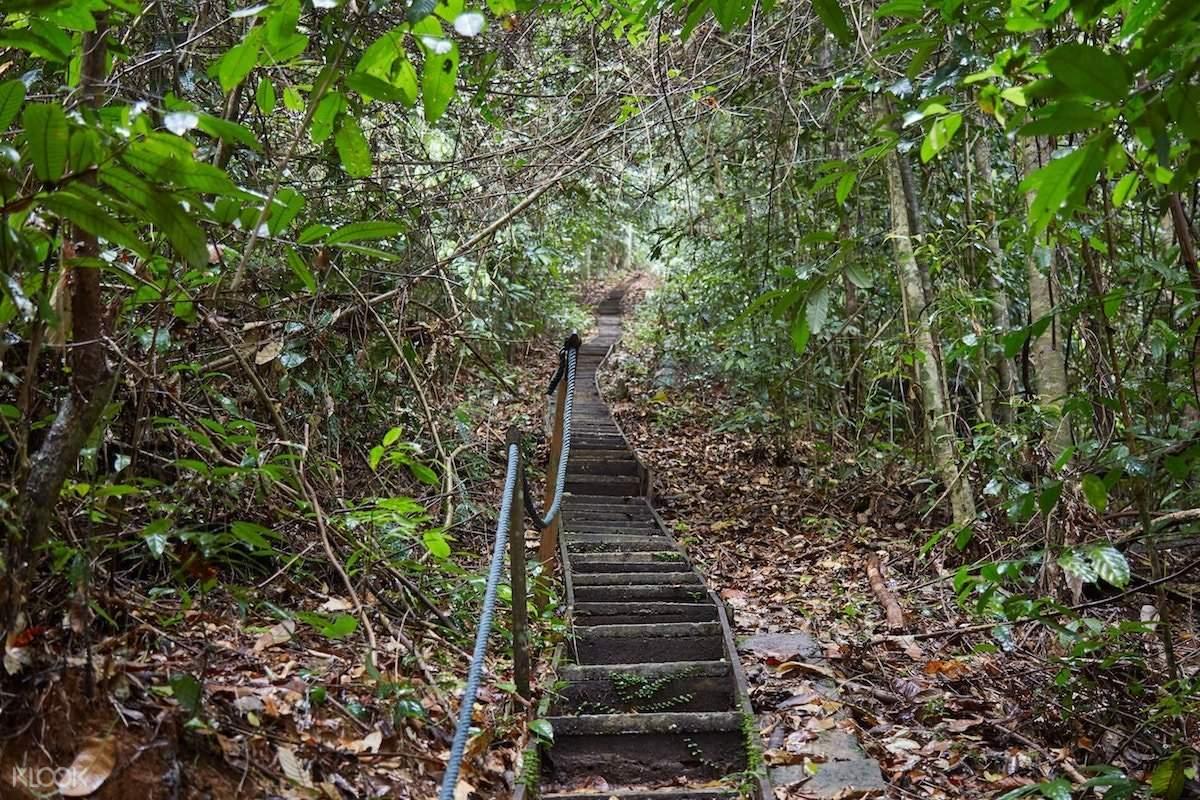 gunung gading hiking trail