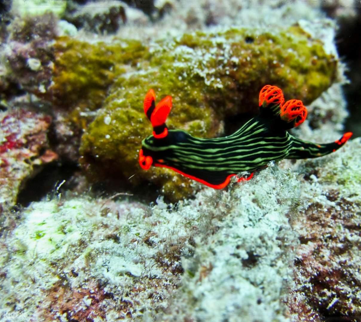 corals and aquatic specie