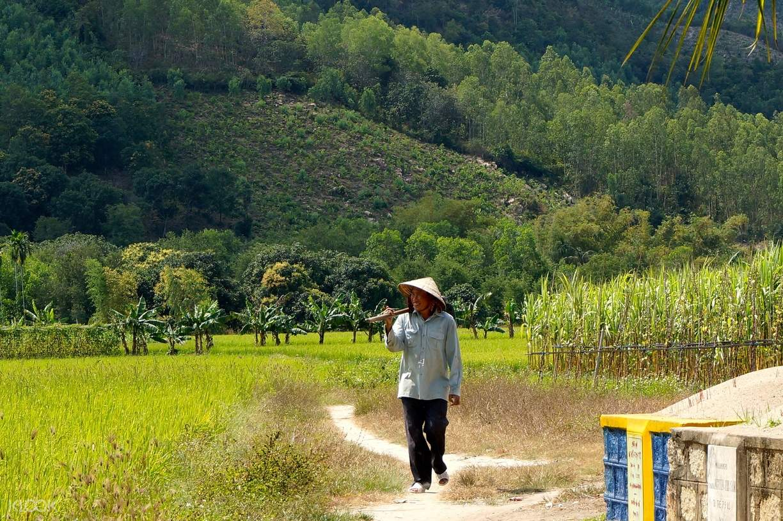 Nha Trang Rice Paddies