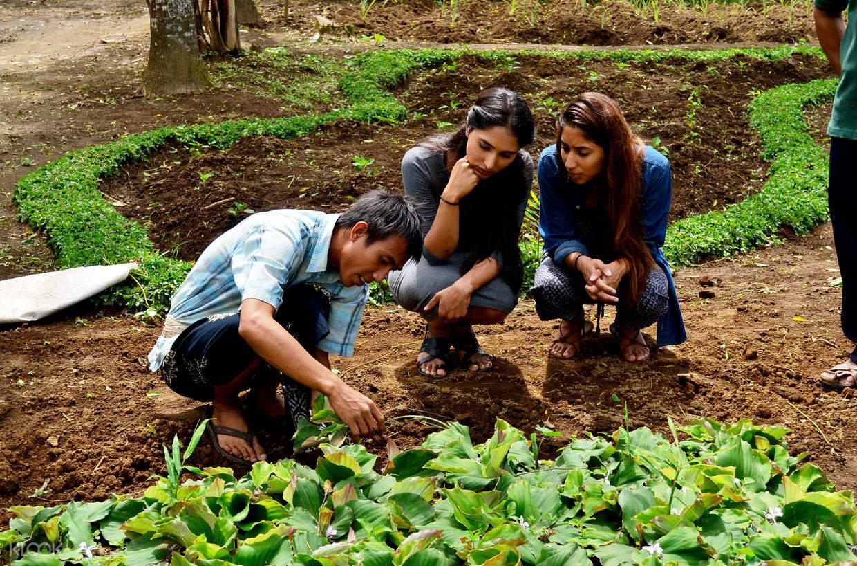 people in an organic farm in bali