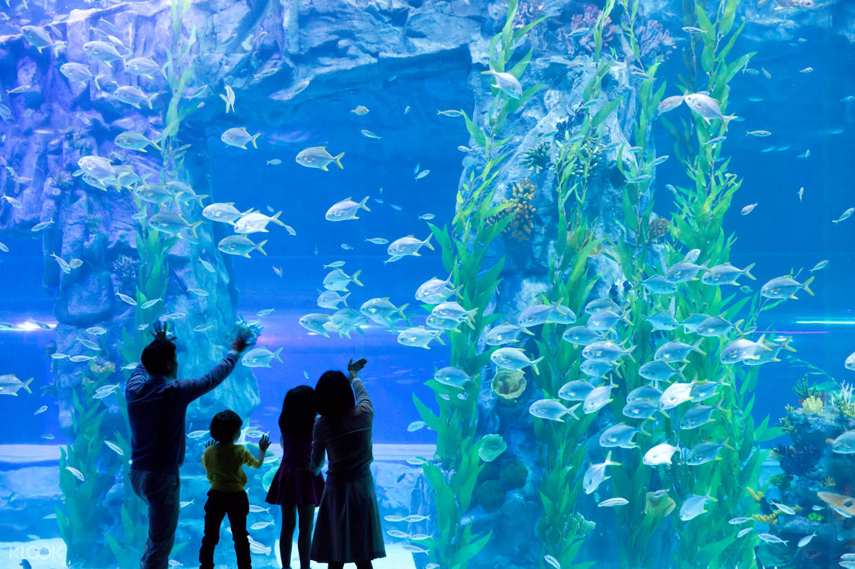 family in front of a tank of fish