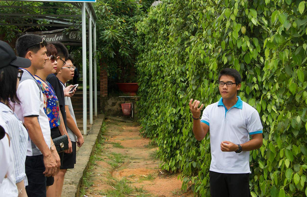 富國島胡椒農場