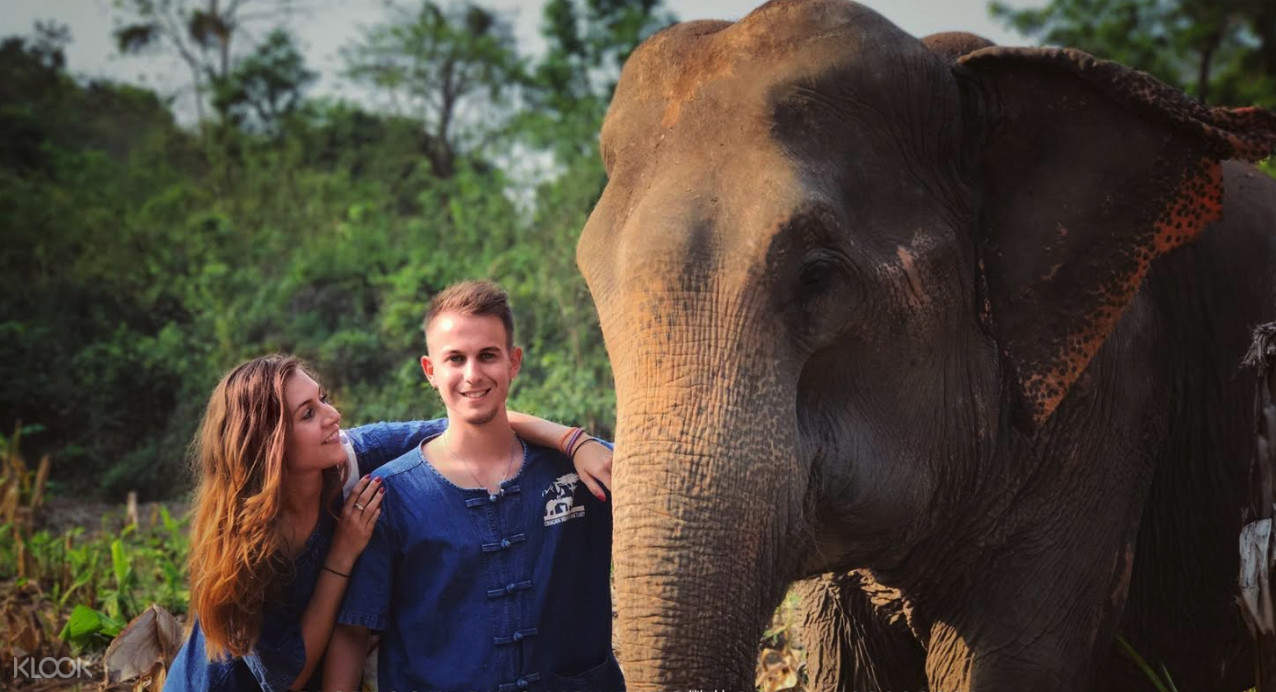清邁山保護區大象護理體驗