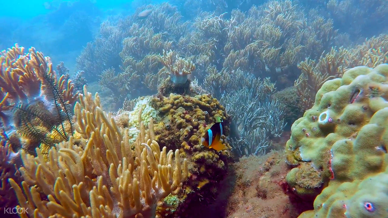 corals and fish in charm island