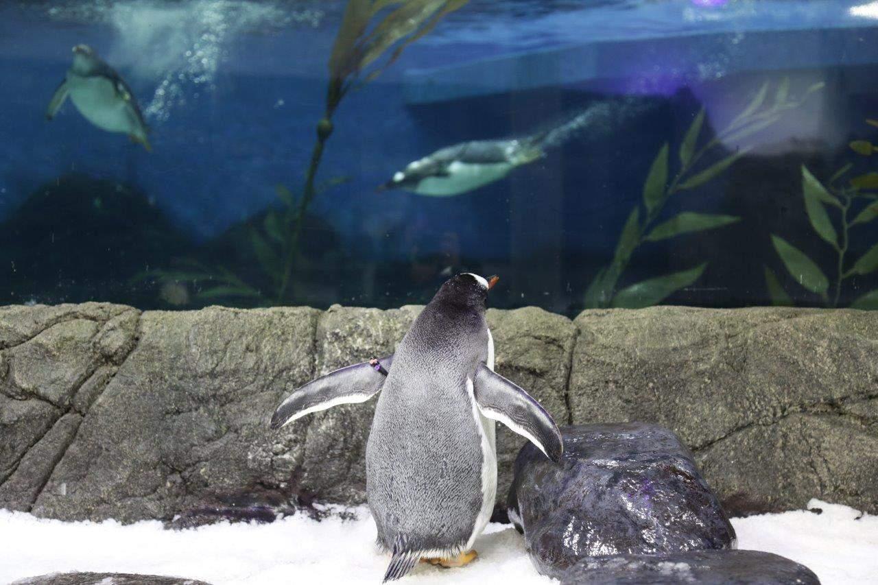 悉尼海洋生物水族馆企鹅观看体验