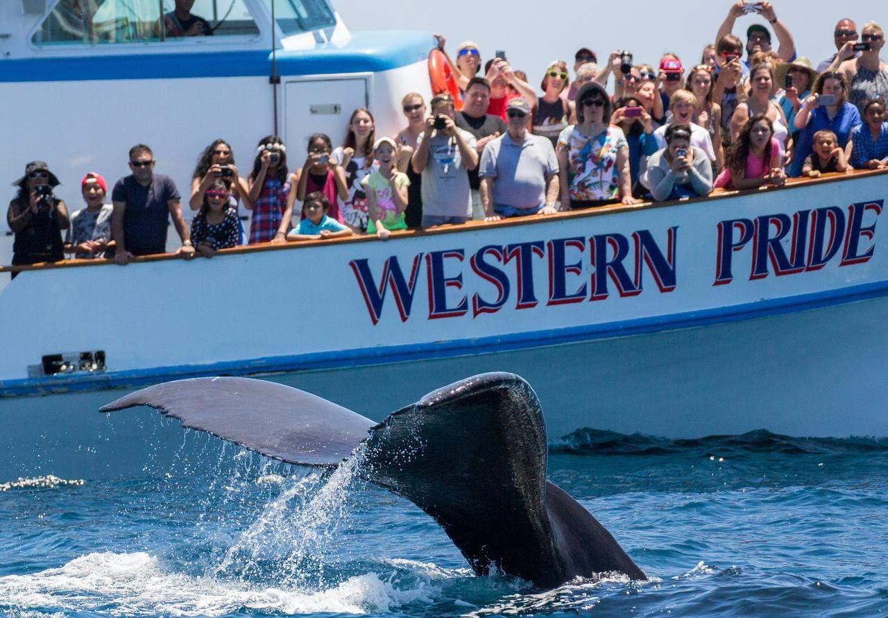 紐波特海灘觀鯨遊船之旅