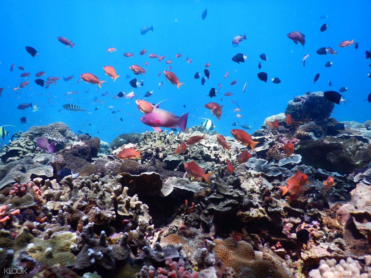 fish and corals in bali