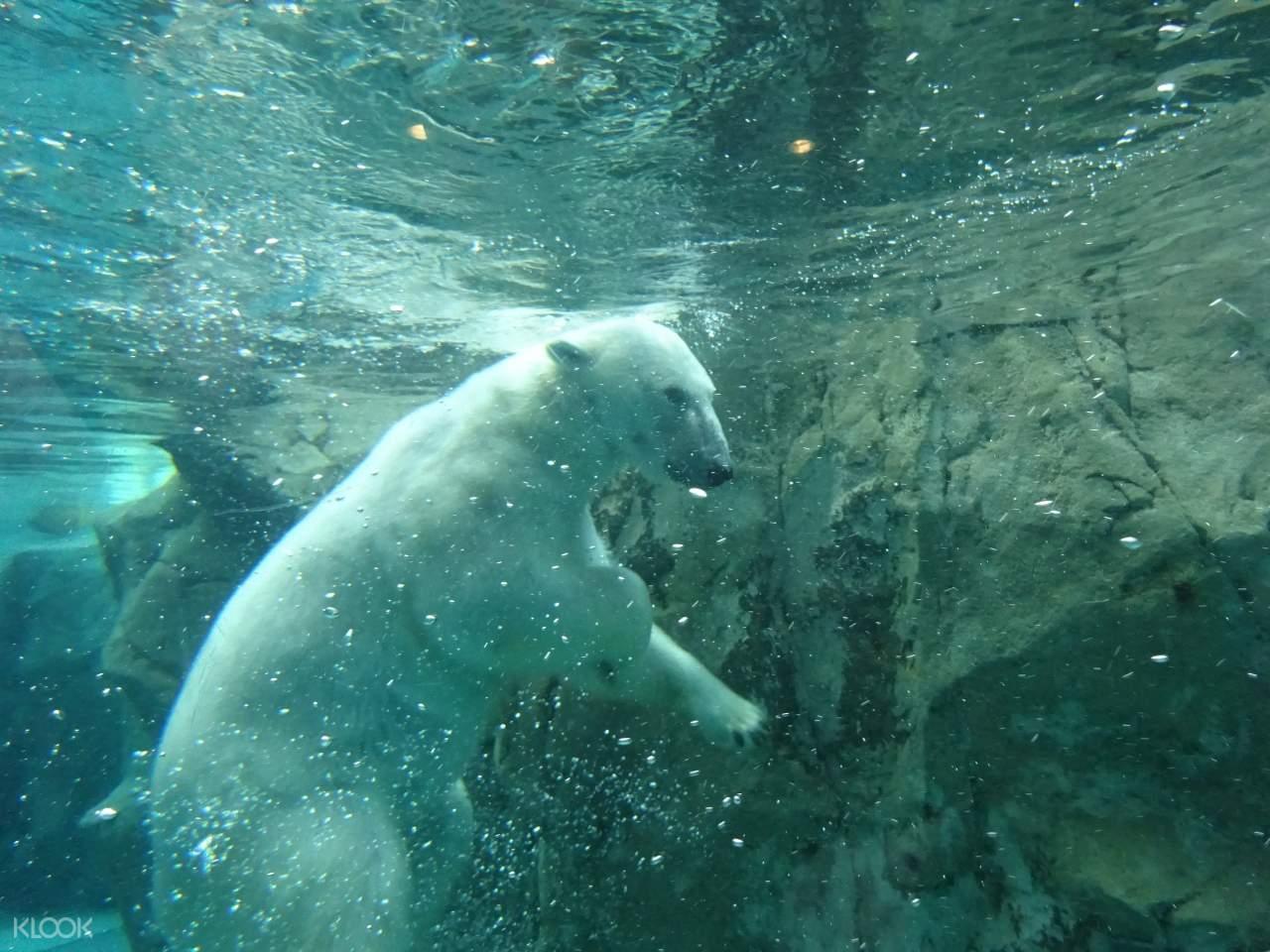 旭山動物園門票