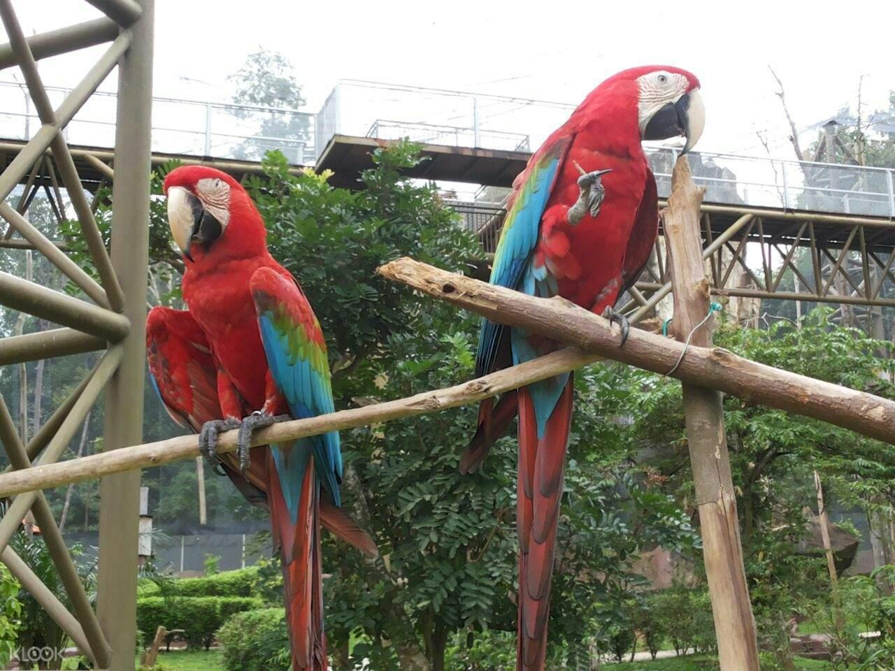 马六甲鸟园