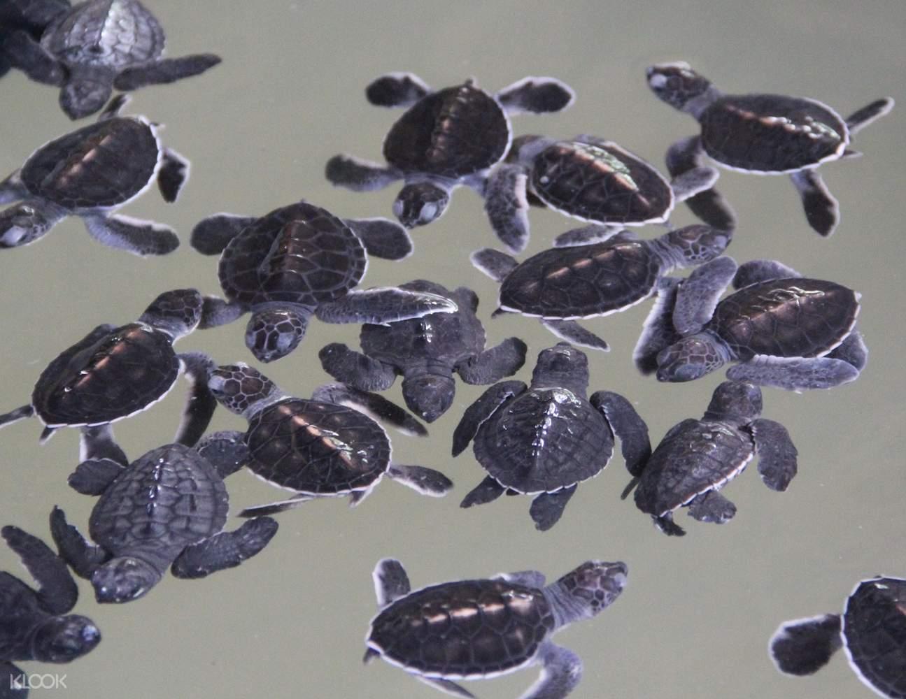 加勒周边景点 Kosgoda海龟基地