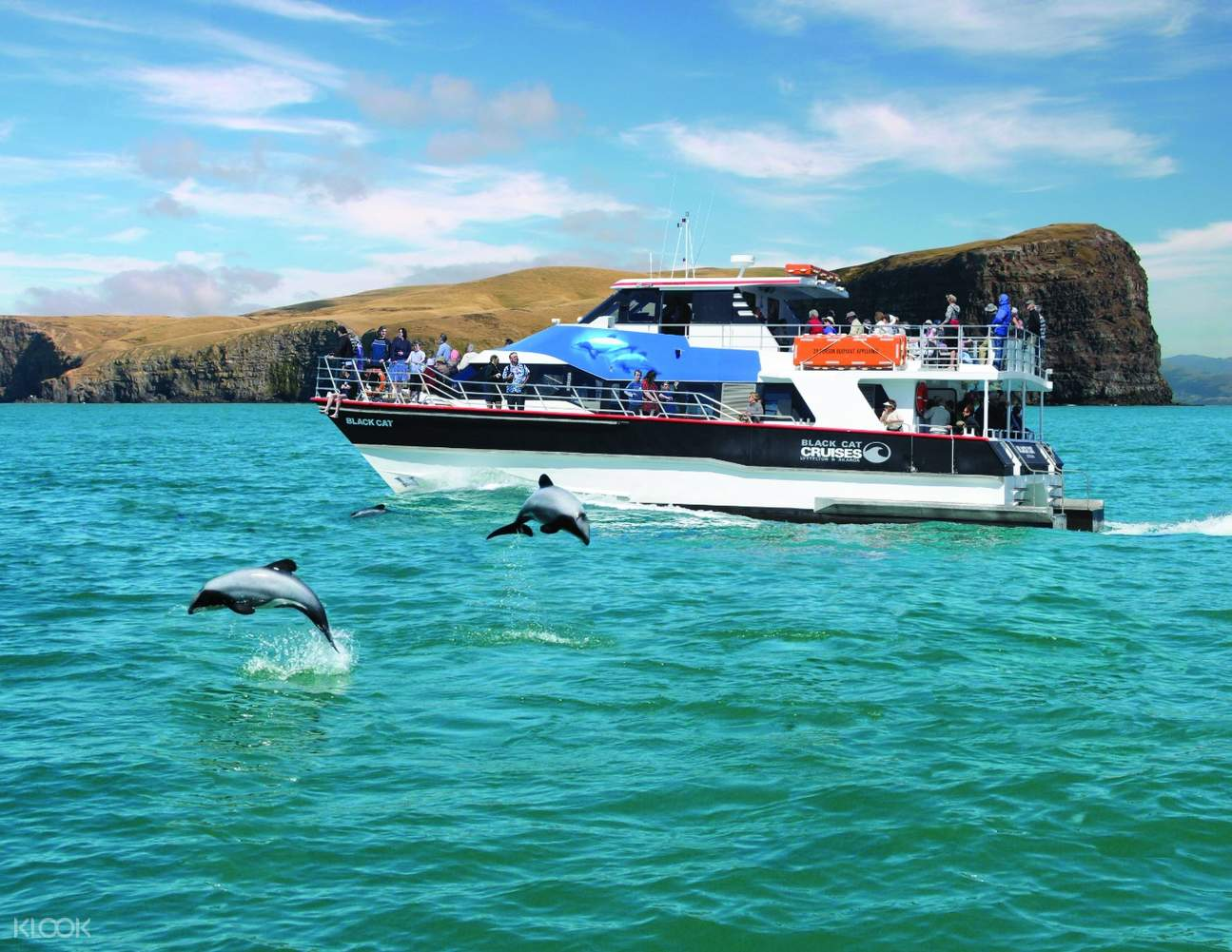 If you'd prefer, watch the dolphins play in the water from the warmth and comfort of the boat