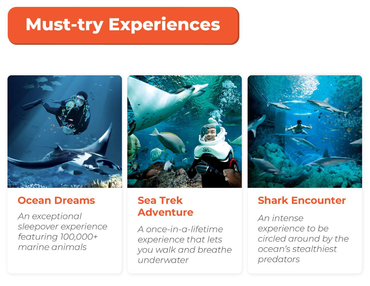 must-try experiences at sea aquarium sentosa