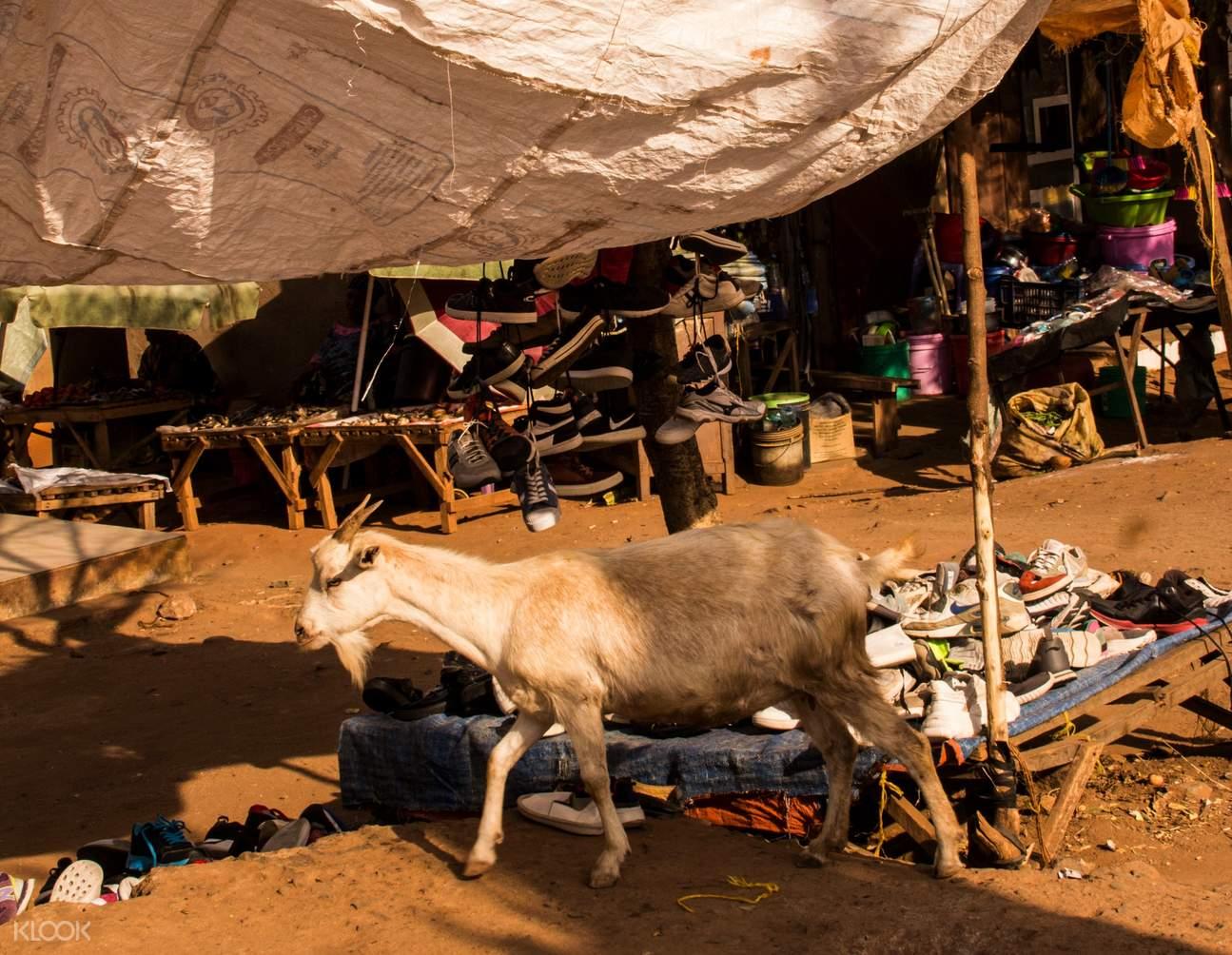 探索坦尚尼亞部落