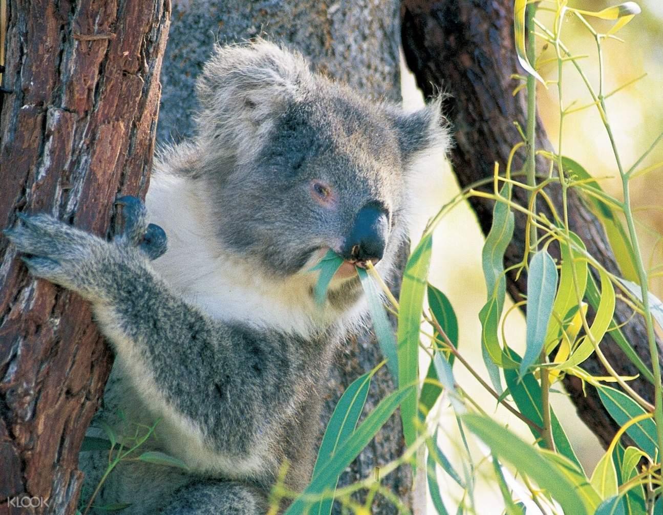 揚切普國家公園,澳洲揚切普國家公園,尖峰石陣沙漠日落和晚間觀星一日遊