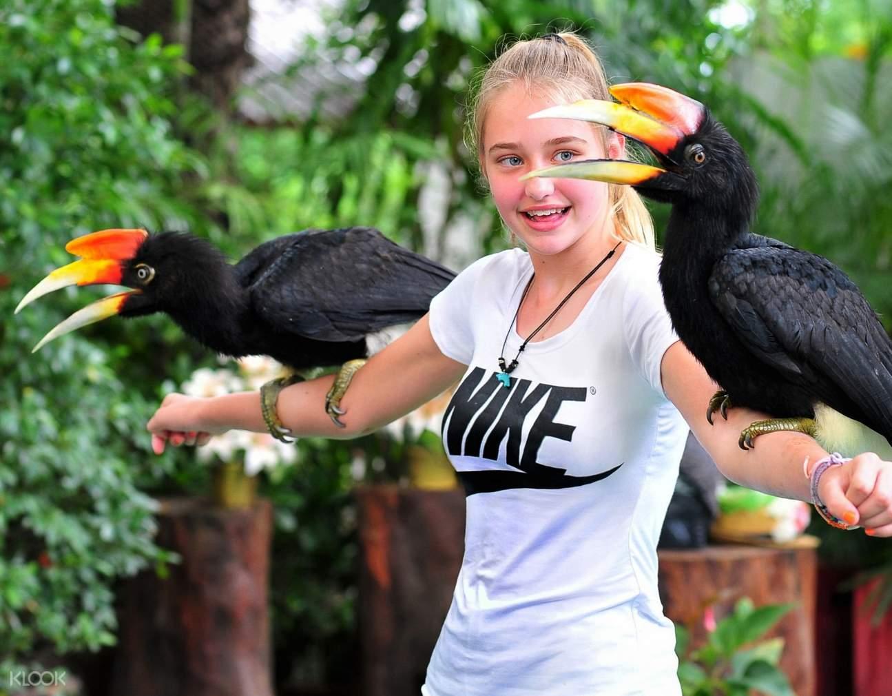 hornbill Phuket Bird Park
