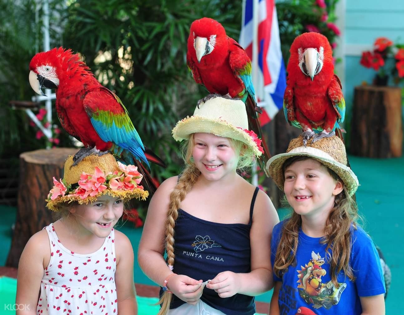 interact with birds at Phuket Bird Park