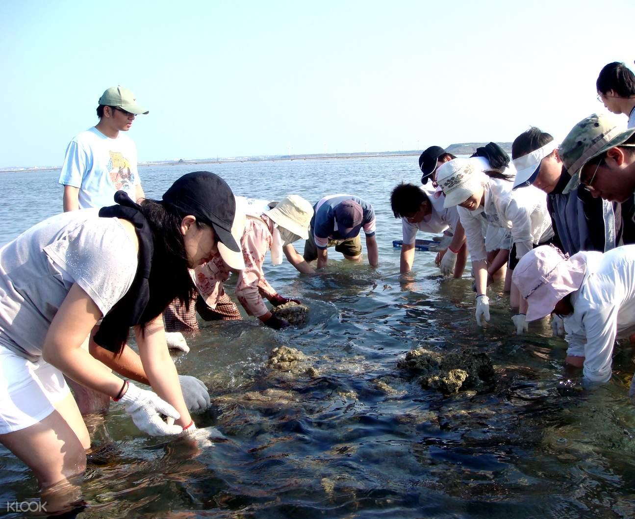 澎湖現抓石斑魚體驗