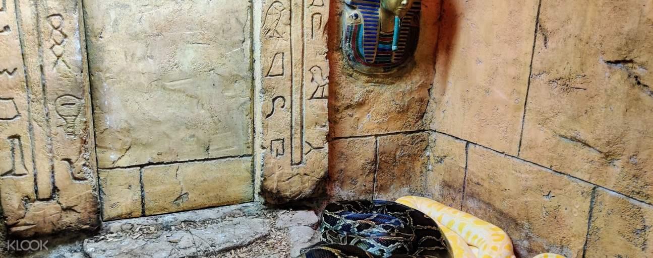Rainforest adventure zoo snakes