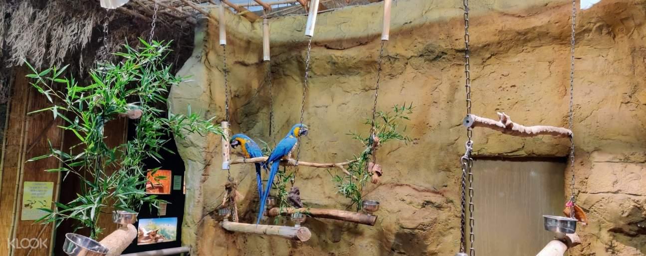 rainforest adventure zoo birds