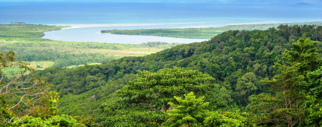 view of forest at Cape Tribulation