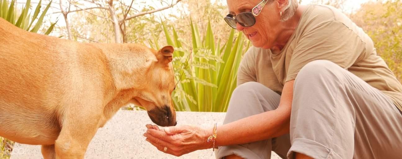 woman feeding a rescue dog