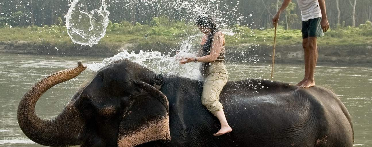 Bating with elephant